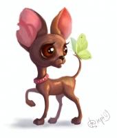 Чихуахуа - метеочувствительная собака
