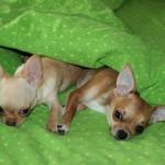 Собака спит в кровати опасно ли?
