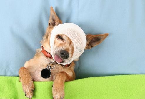 Паразиты, которые вызывают болезни у собак