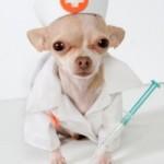Респираторные заболевания у собак