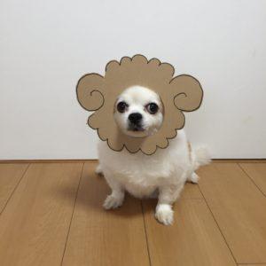 костюм из картона для собаки - барашка