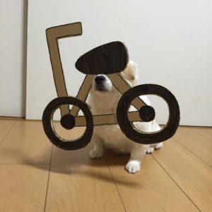 костюм из картона для собаки - велособака