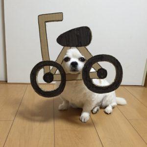 костюм из картона для собаки - велосипедист