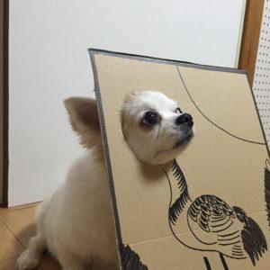 костюм из картона для собаки - цапля вид сбоку