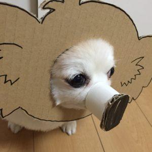 костюм из картона для собаки - чебурашка вид сбоку
