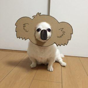 костюм из картона для собаки - чебурашка