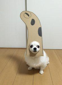 костюм из картона для собаки - змейка