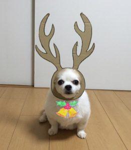 костюм из картона для собаки - оленёнок