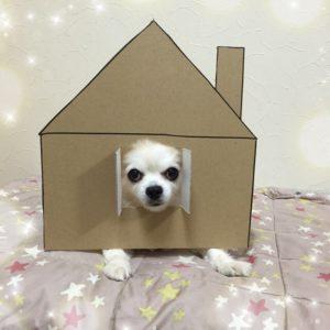 костюм из картона для собаки - я в домике