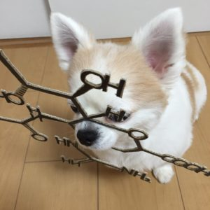 костюм из картона для собаки - химия