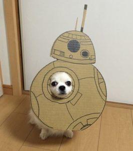 костюм из картона для собаки - космический челнок
