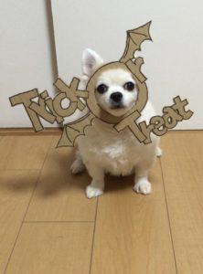 костюм из картона для собаки - летучая мышь