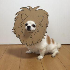 костюм из картона для собаки - лев