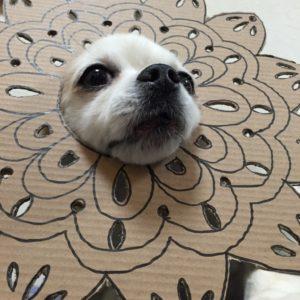 костюм из картона для собаки - царевна