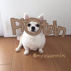 костюм из картона для собаки - протеин