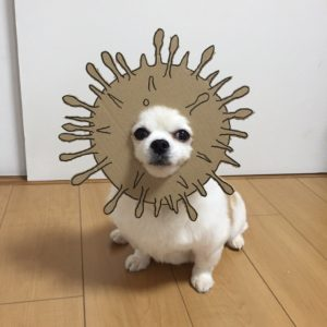 костюм из картона для собаки - рыба йож