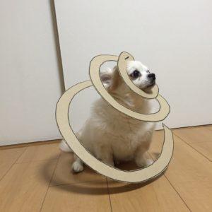 костюм из картона для собаки - в спирале