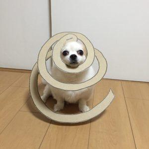 костюм из картона для собаки - спираль