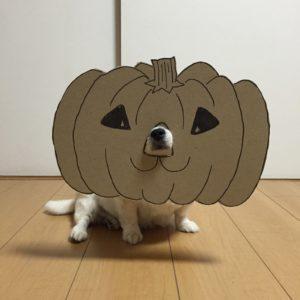 костюм из картона для собаки - тыква - хеллоувин