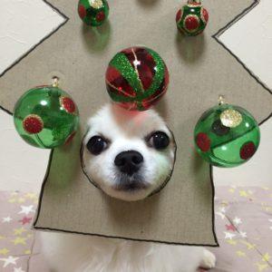 костюм из картона для собаки - йолка